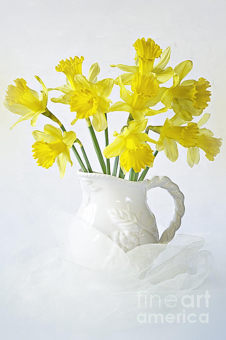 Daffodils Photograph - Sweet Daffs by Jacky Parker