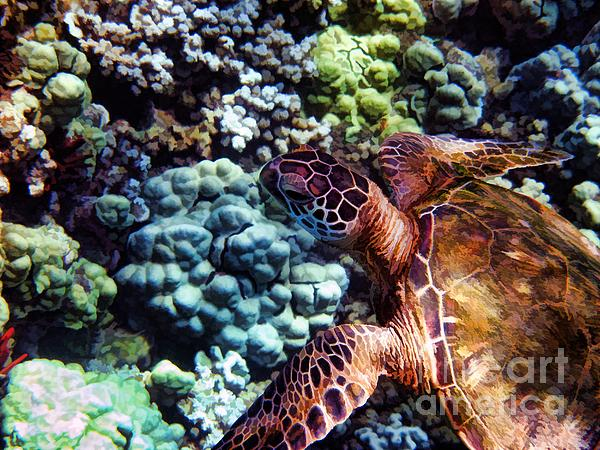 Painterly Photograph - Swimming With A Sea Turtle by Peggy Hughes