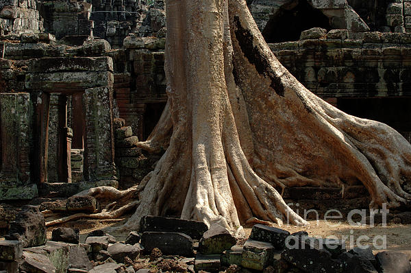 Ta Prohm Photograph - Ta Prohm Cambodia by Bob Christopher