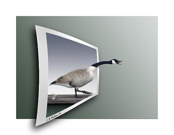 2d Photograph - Take A Gander by Brian Wallace