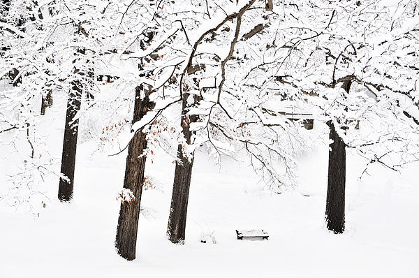 Bench Photograph - Take A Snowy Seat by Emily Stauring