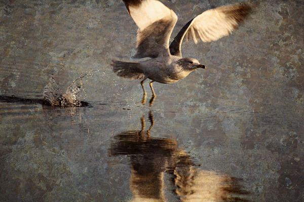 Andrew Pacheco Photograph - Take Flight by Andrew Pacheco