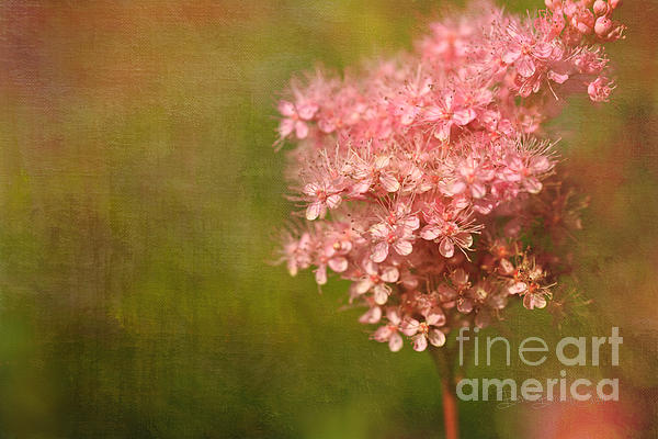 Blooms Photograph - Taste Of Summer by Beve Brown-Clark Photography