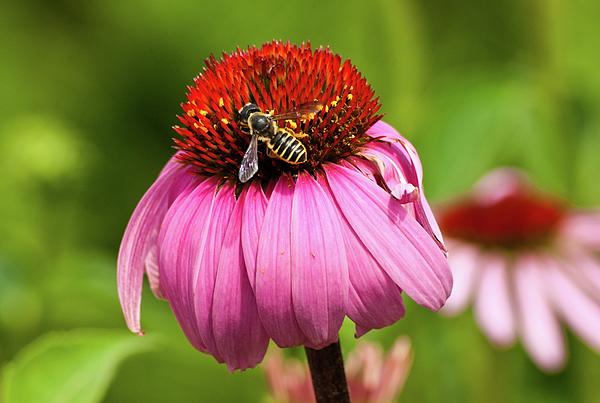 Flower Photograph - Tasty Treat by Christi Kraft