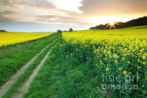 Beautiful Photograph - The Beautiful Yellow Rapeseed Field by Boon Mee