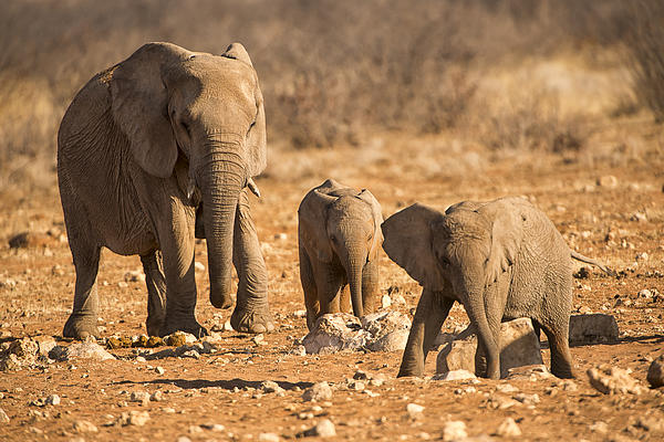 Sand Photograph - The Elephants Itching Rock by Paul W Sharpe Aka Wizard of Wonders