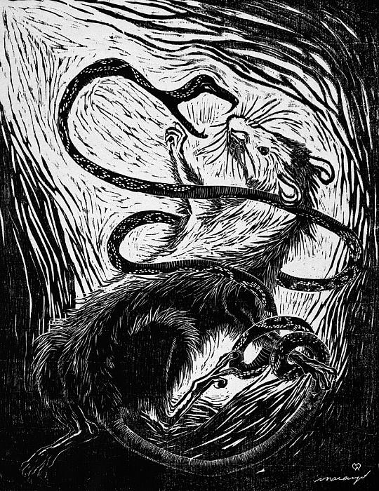 Rat Drawing - The Enemy Within by Maria Arango Diener