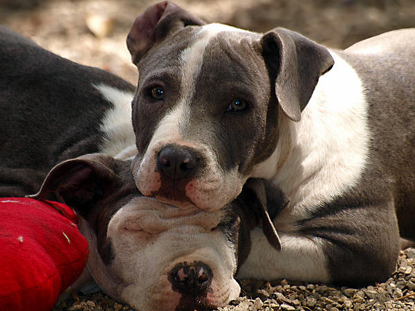 Dog Photograph - The Good Pillow by Camille Lopez
