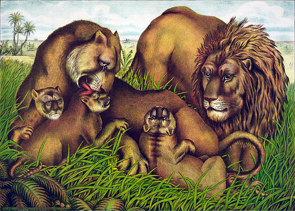 Lions Digital Art - The Lion Family by Georgia Fowler