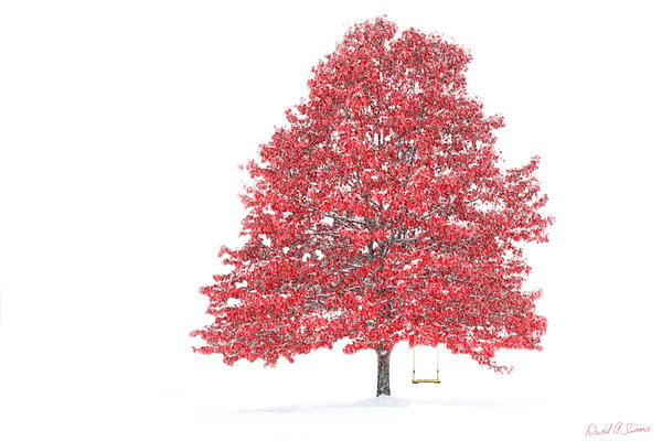 Winter Digital Art - The Oak Tree by David Simons