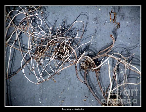 Weed Photograph - The Trapped Weed by Rose Santuci-Sofranko