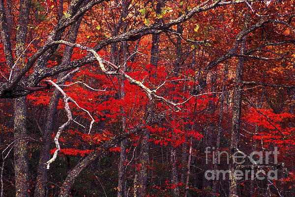 Woods Photograph - The Woods Aflame In Red by Paul W Faust -  Impressions of Light