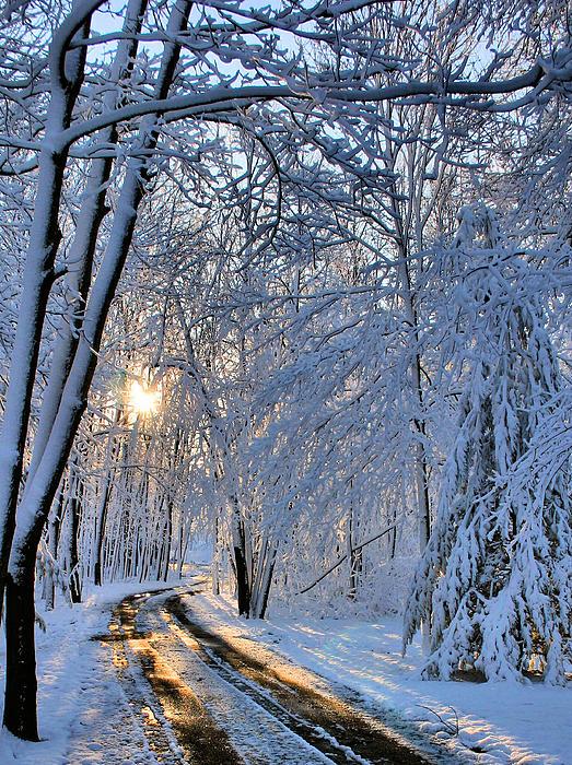 Sun Photograph - Through The Woods by Kristin Elmquist