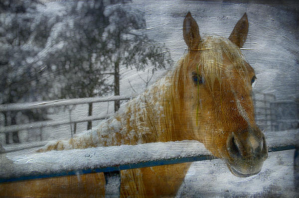 Horse Photograph - Time Stands Still by Kathy Jennings