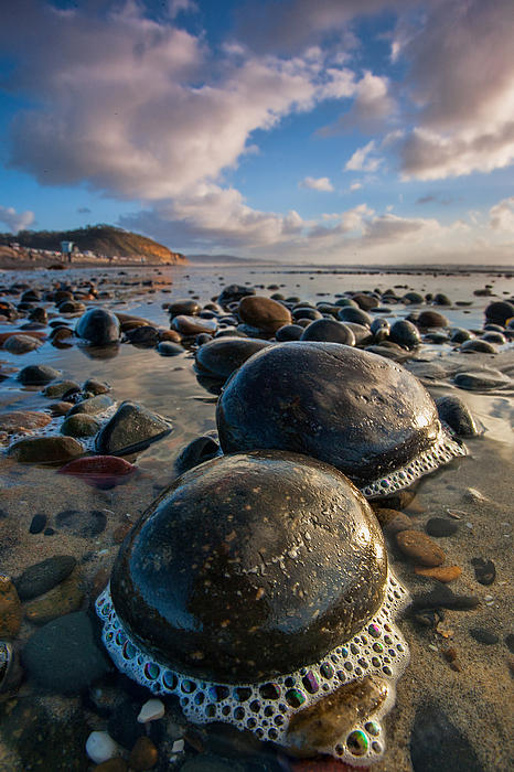 Beach Photograph - Tiny Giants by Peter Tellone