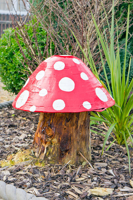 Autumn Photograph - Toadstool by Tom Gowanlock