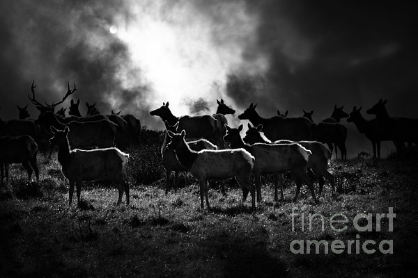 Bayarea Photograph - Tomales Bay Harem Under The Midnight Moon - 7d21241 - Black And White by Wingsdomain Art and Photography