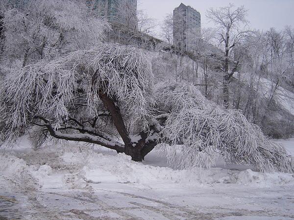 Landscape Photograph - Tracks By A Tree by Anastasia Konn