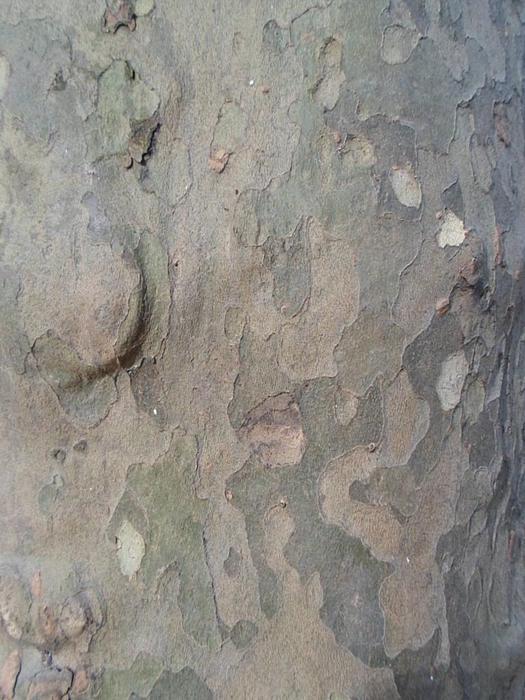 Bark Photograph - Tree Bark by Jenna Mengersen