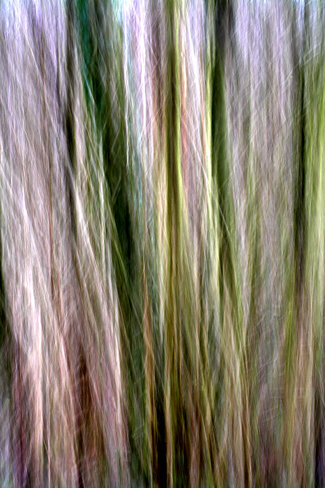 Tree Photograph - Tree Boughs Abstract II by Natalie Kinnear