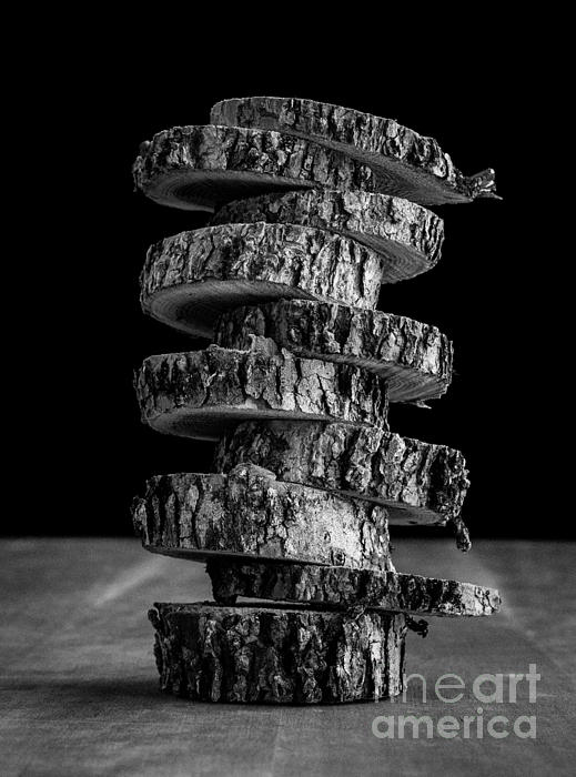 Cut Photograph - Tree Deconstructed by Edward Fielding