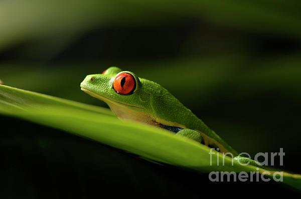 Frog Photograph - Tree Frog 8 by Bob Christopher