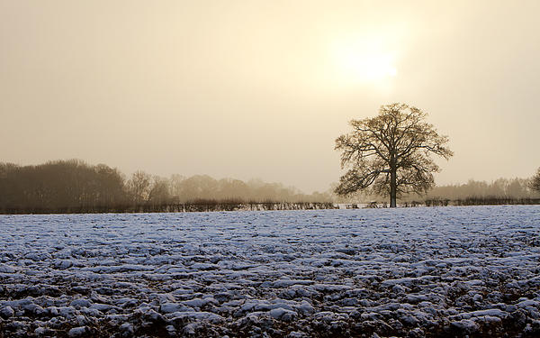 Beautiful Photograph - Tree In A Field On A Snowy Day by Fizzy Image