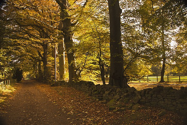 The Way Forward Photograph - Tree Lined Road Covered With Fallen by John Short
