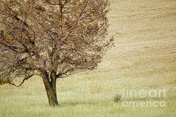 Tree Digital Art - Tree by Nur Roy