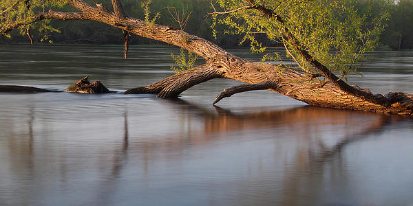 Flood Photograph - Tree Wash by Theo O Connor
