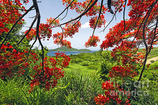 Bay Photograph - Tropical Bloom by George Oze