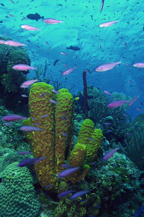 Tropical Fish And Coral Reef Photograph by Comstock Images