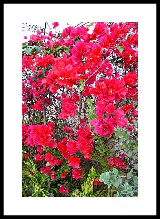 Tropical Flowers Of South Florida Photograph by Dora Sofia Caputo Photographic Design and Fine Art