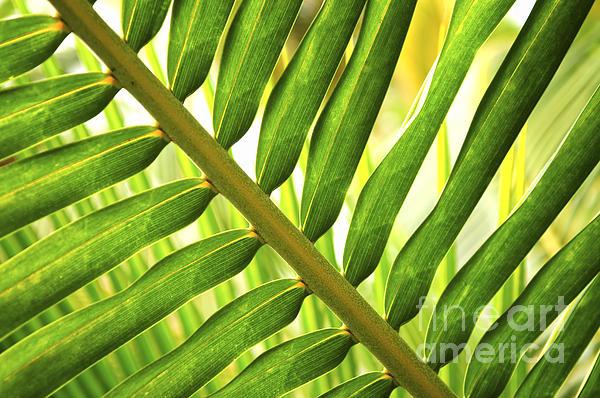 Palm Photograph - Tropical Leaf by Elena Elisseeva