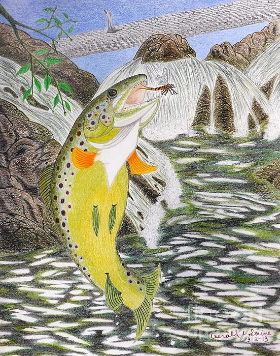 Trout Stream Drawing - Trout Stream In May by Gerald Strine