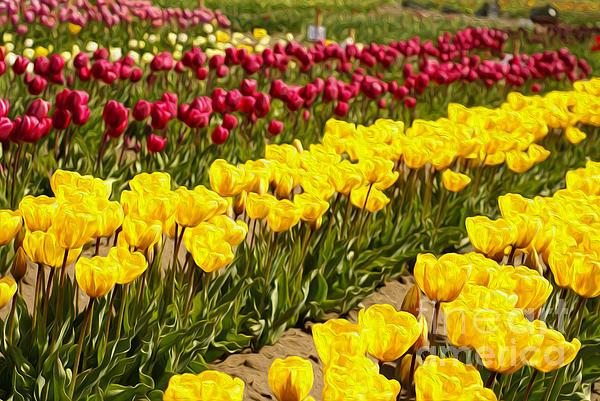 Tulip Photograph - Tulip Field by Nur Roy