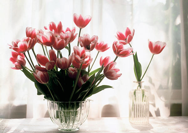 Still-life; Tulips; Flower; Vase; Interior; Pink; White; Floral Painting - Tulip by Jeanette Korab