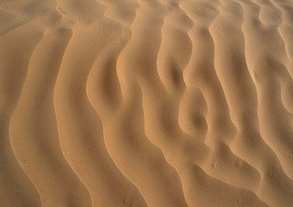 Tunisia, Sahara Desert, Ripples In Sand. Photograph by James Hardy