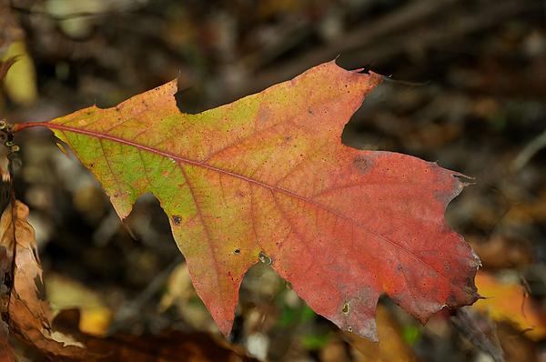 Autumn Photograph - Turn A Leaf by JAMART Photography