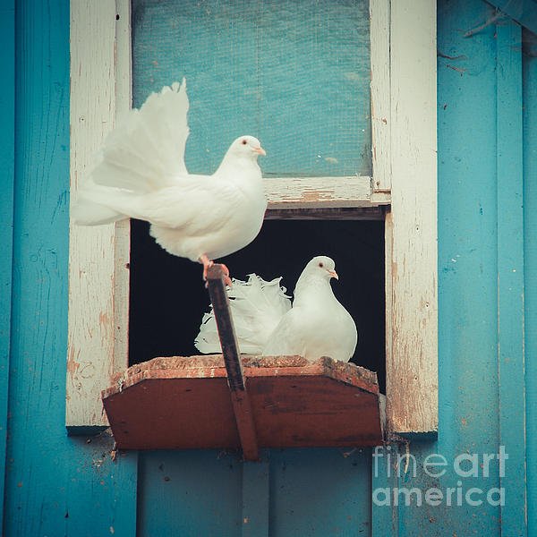 Animals Photograph - Turtle Doves 1x1 by Hannes Cmarits