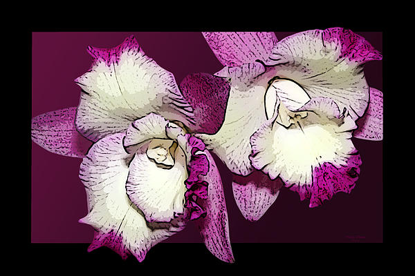 Orchids Photograph - Two Baby Orchids by Phyllis Denton
