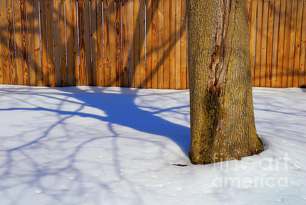Winter Photograph - Two Trees In One by Paul W Faust -  Impressions of Light