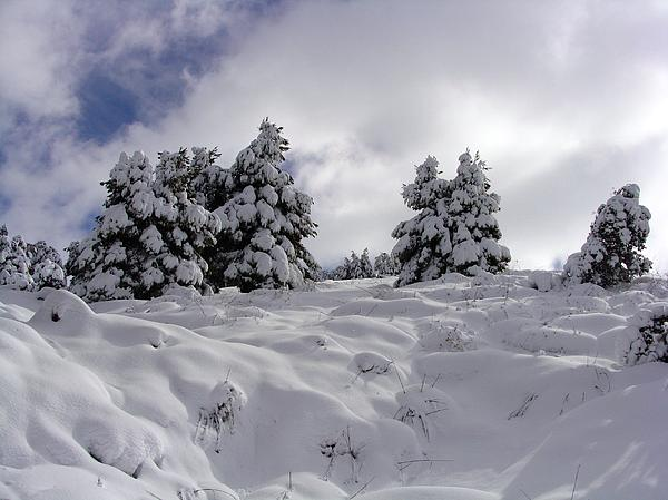 Under Snow Photograph by Faouzi Taleb