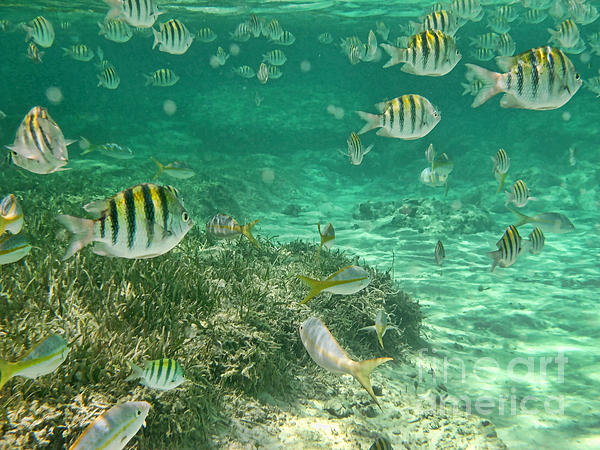 Underwater Photograph - Under The Sea by Peggy Hughes