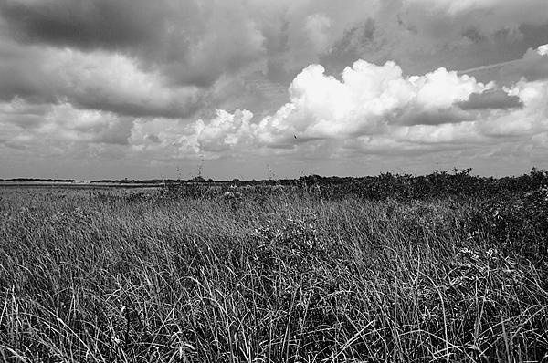 Everglades Photograph - Vast Landscape by Andres LaBrada