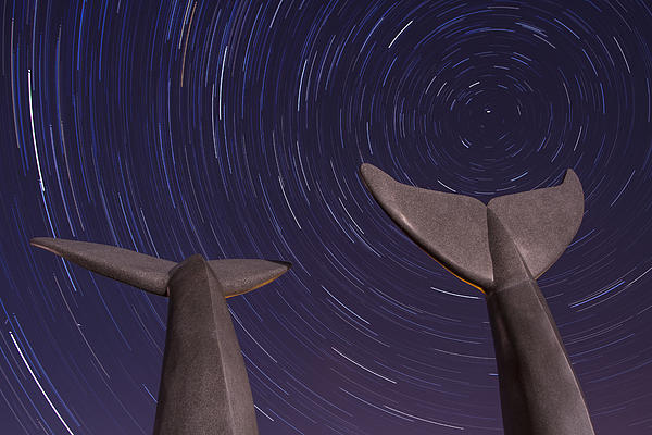 Vermont Photograph - Vermont Night Landscape Star Trails Whale Tails by Andy Gimino
