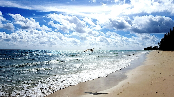 View Of Calm Beach Against Cloudy Sky Photograph by Sabna Vrbensk / EyeEm