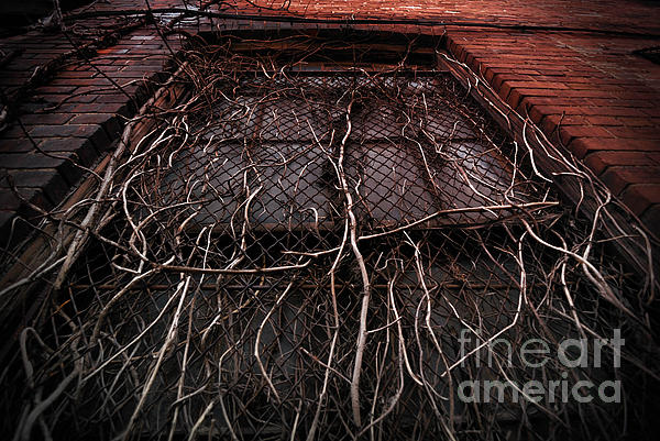 Abandoned Photograph - Vine Of Decay 1 by Amy Cicconi