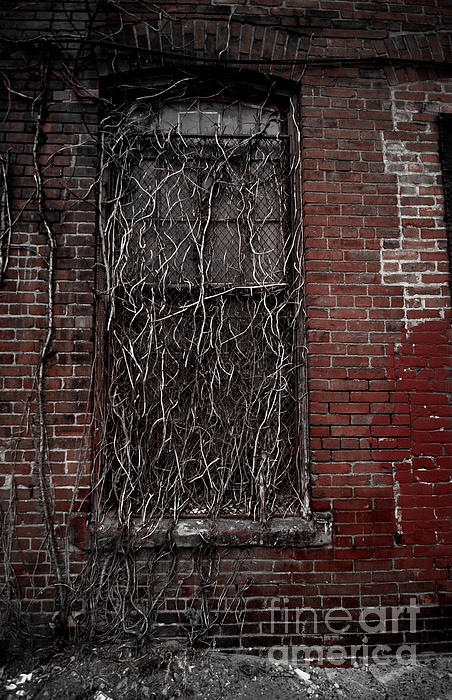 Abandoned Photograph - Vines Of Decay by Amy Cicconi