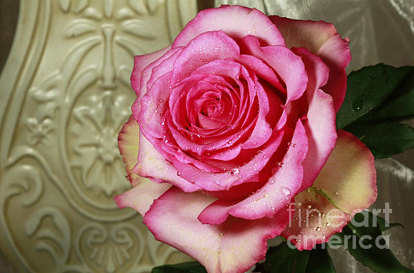 Vintage Beauty Rose Photograph by Inspired Nature Photography Fine Art Photography
